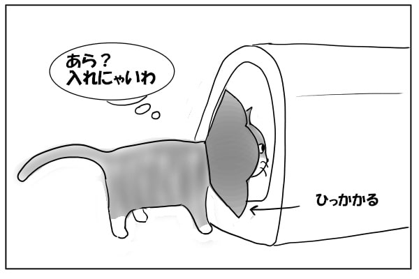トイレでひっかかる猫