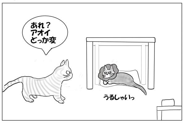 ご機嫌の悪い猫