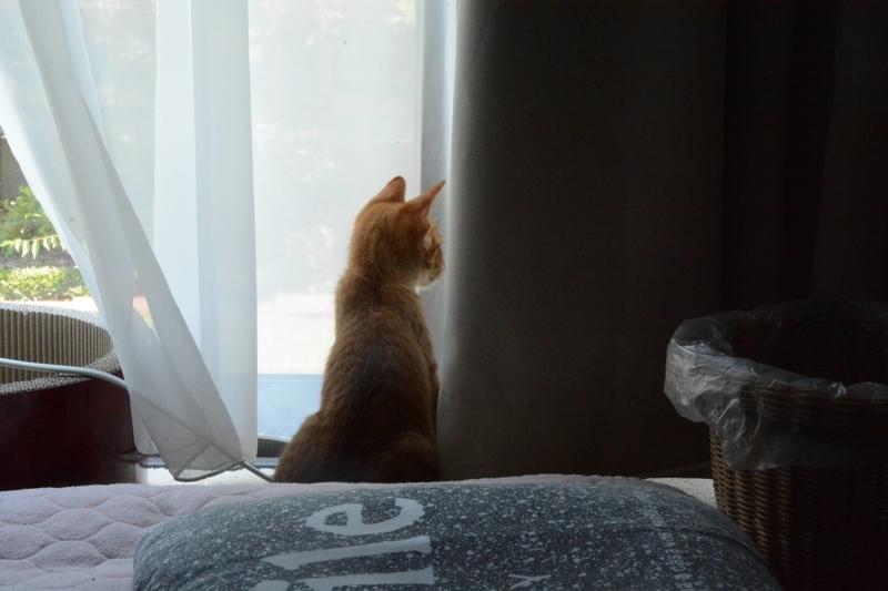 窓辺の仔猫