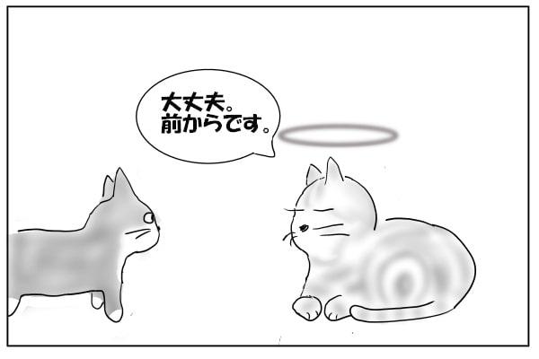 慣れっこの猫