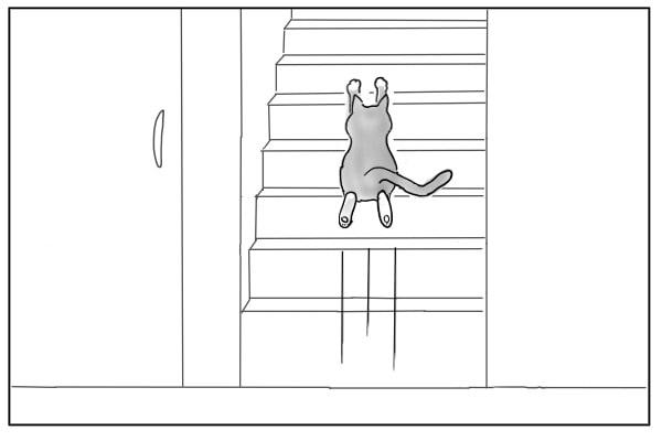 駆け上がる猫