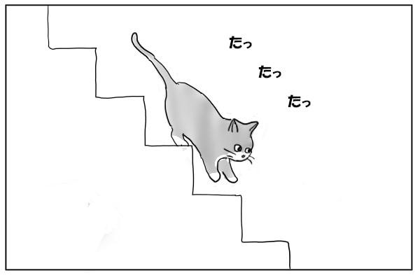 階段をおりる猫