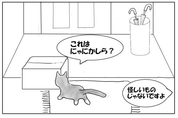 箱の匂いを嗅ぐ猫