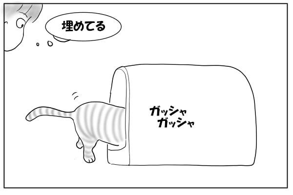 猫砂をかける猫