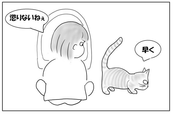 懲りない猫
