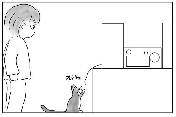 コードを見つけた猫