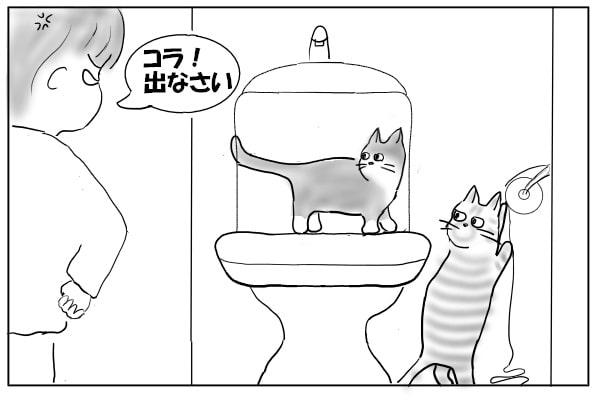 叱られる猫