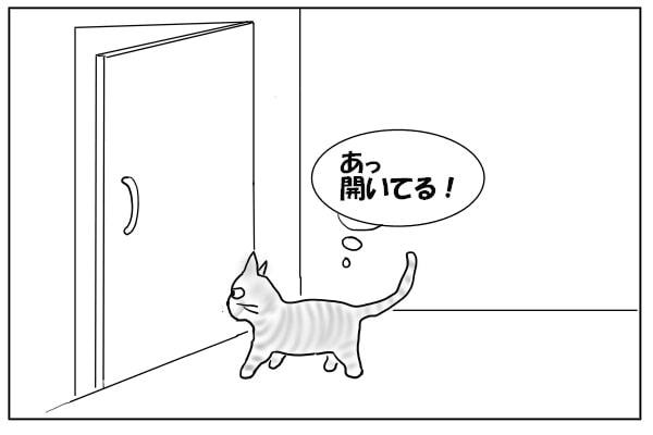 開いてるドアに気づく猫