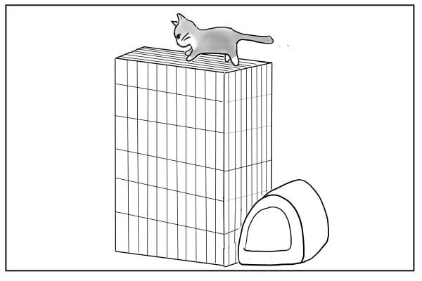 ケージの上を歩く猫