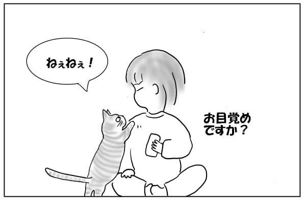 目覚めた猫