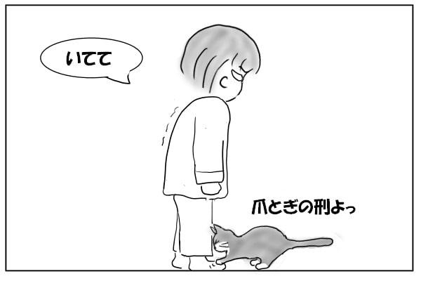靴下をひっかく猫