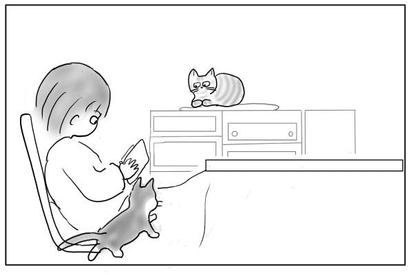 膝に乗ろうとする猫