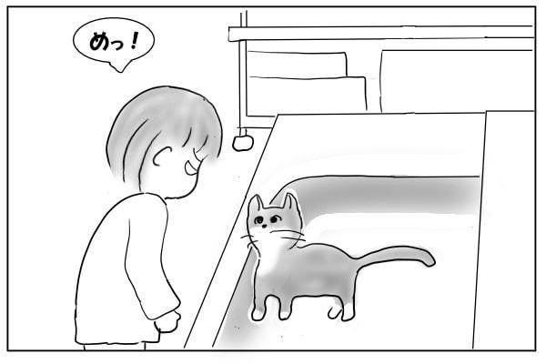シンクに入る猫