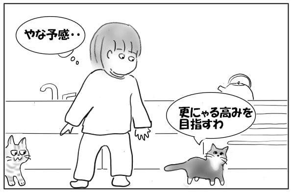 登りたい猫