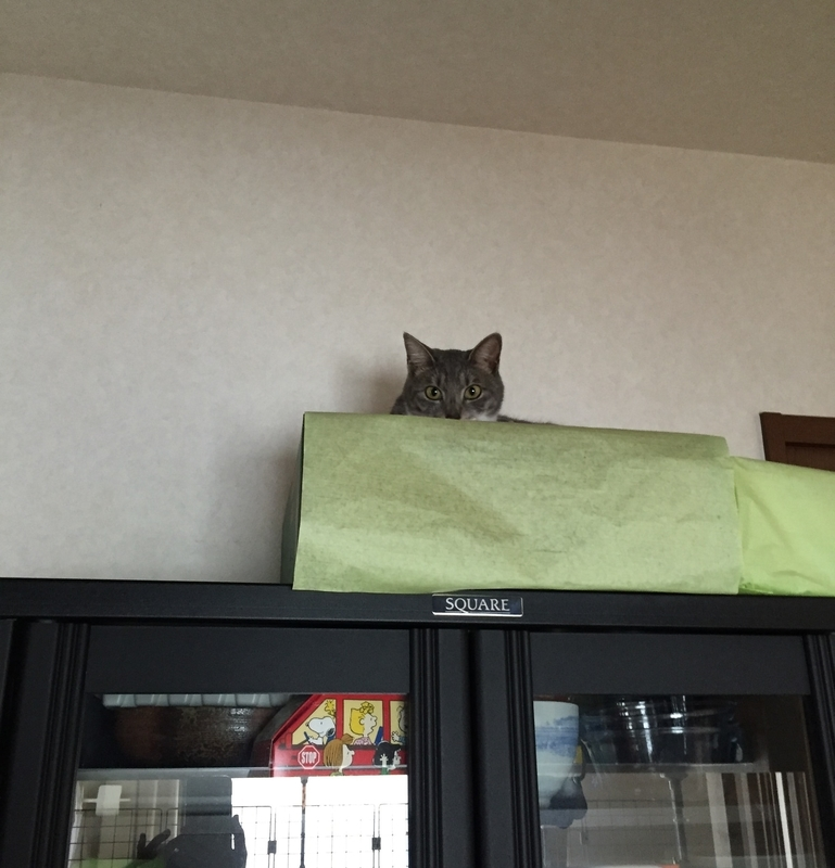 食器棚の上の猫