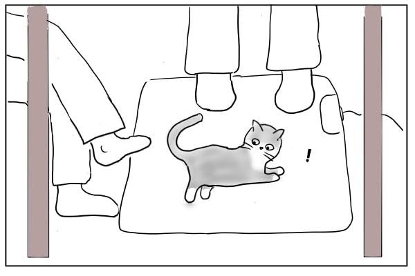 相棒をさがす猫