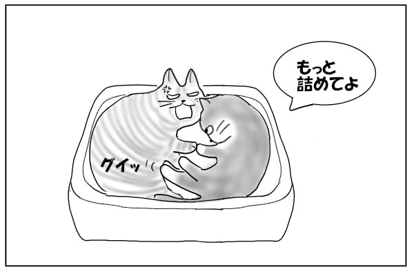 押しのける猫