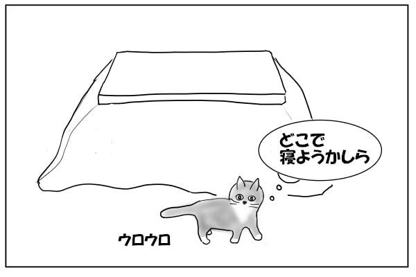 うろつく猫