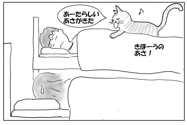 起こしにくる猫