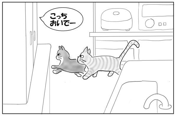 はしゃぐ猫たち