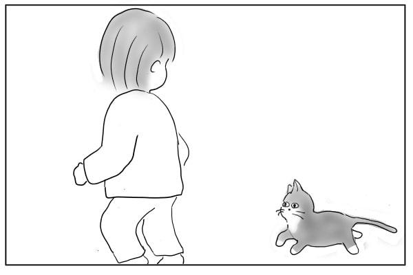 追いかける猫