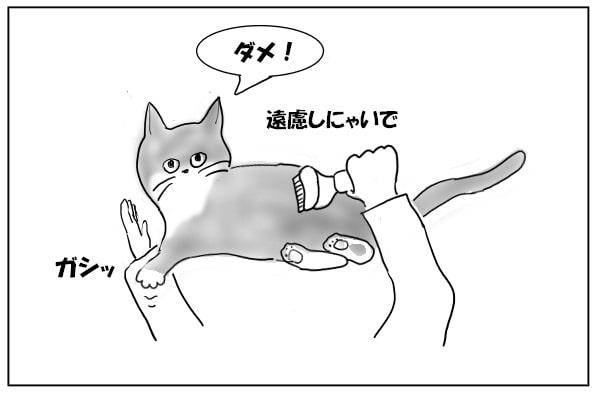 手を抑える猫