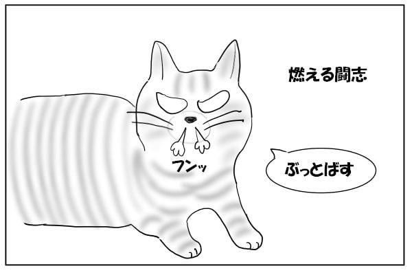 やる気満々の猫