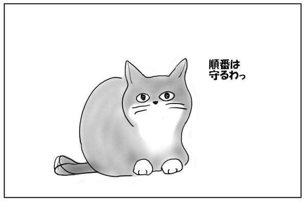待機する猫