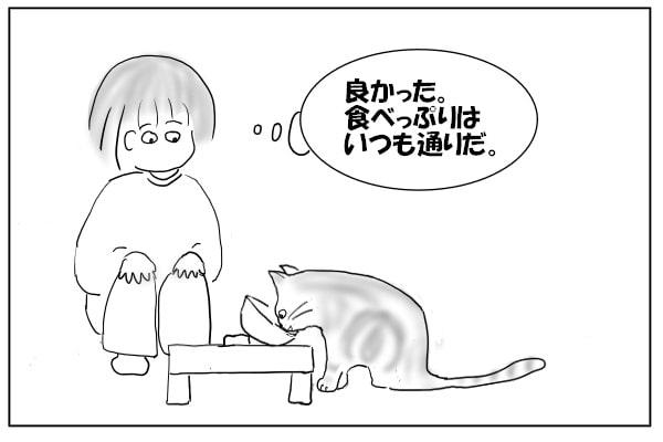 ガツガツ食べる猫