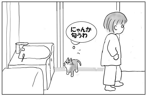 入れ替わりに入ってきた猫
