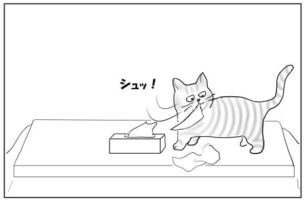 ティッシュを引っ張り出す猫