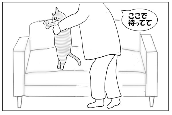 ソファに猫をおろす
