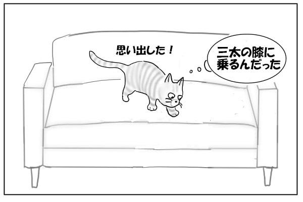 思い出した猫