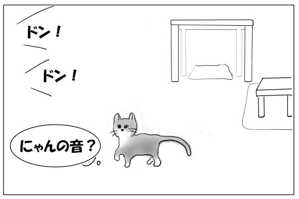 花火の音を聞く猫