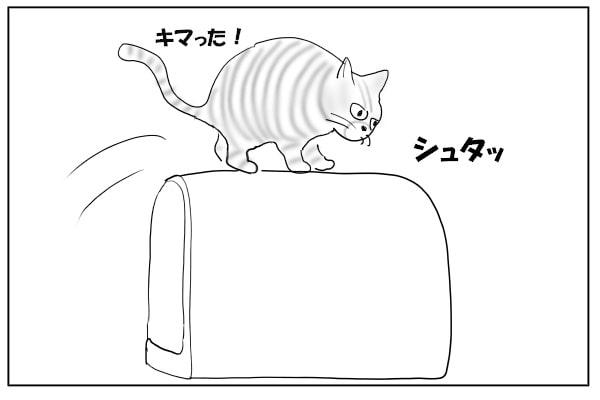 トイレに飛び乗る猫
