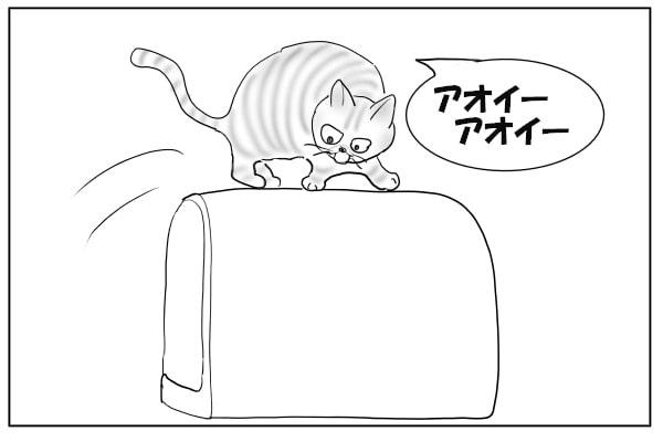 嫌がらせする猫