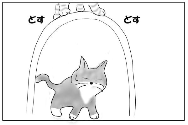 メイワクな猫