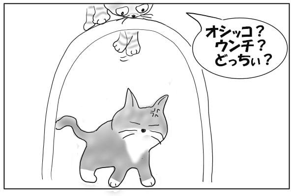 手を突っ込む猫