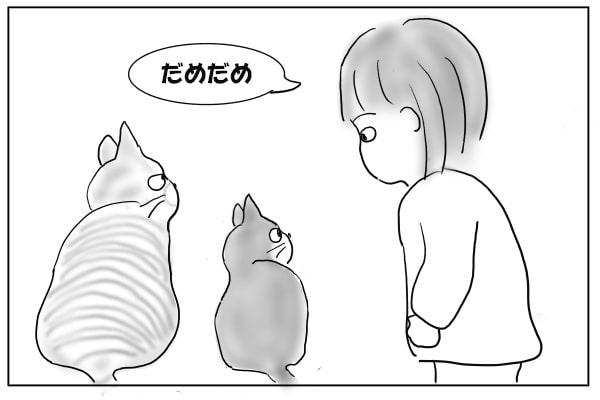 猫を止める