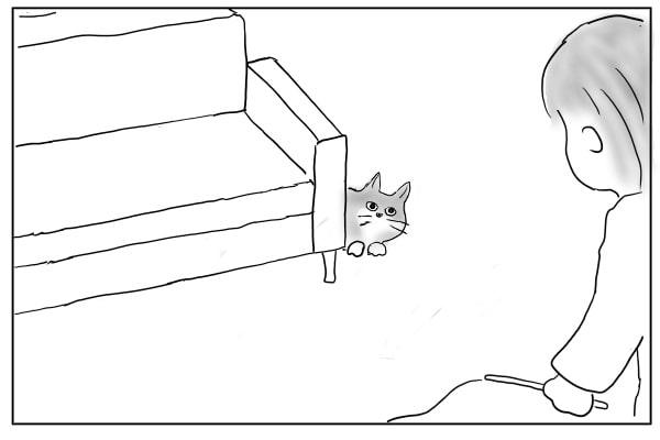 待ってる猫