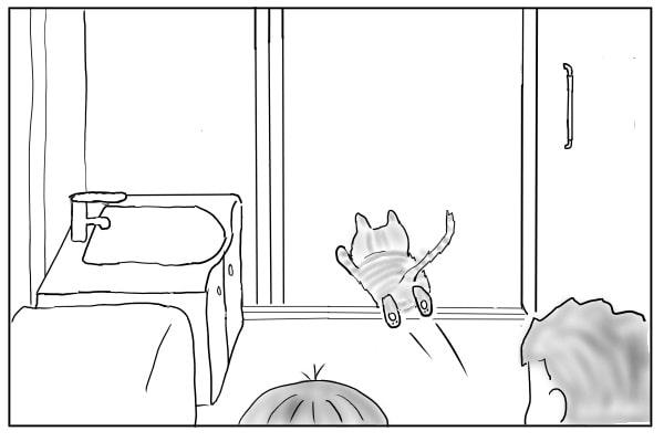 解放された猫