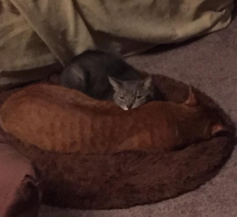 仲良く寝る猫たち