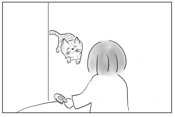 小走りの猫