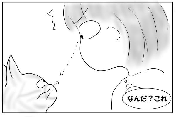 猫の鼻の下