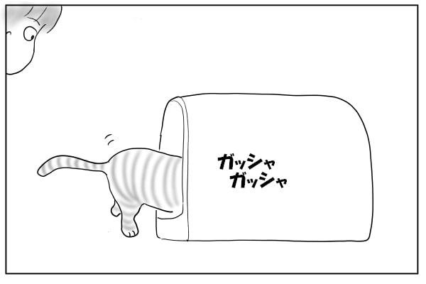 砂をかける猫