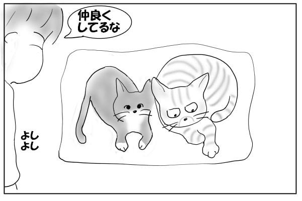 くっついてる猫