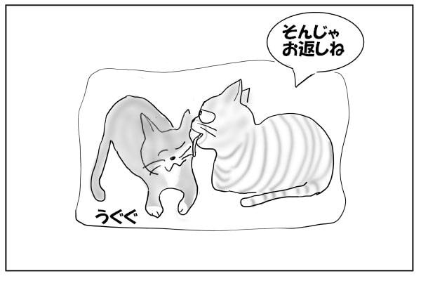 お返しする猫