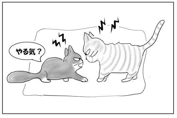 猫の小競り合い