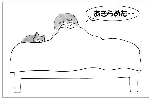 移動して寝る猫