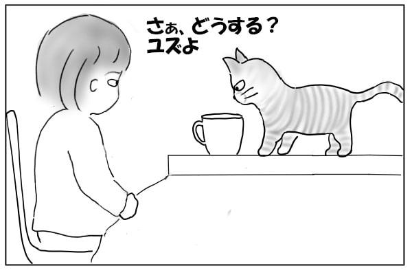 猫をじっと見る